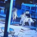 Padre de familia mata a perrito de una patada para salvar a su hijo; caso indigna