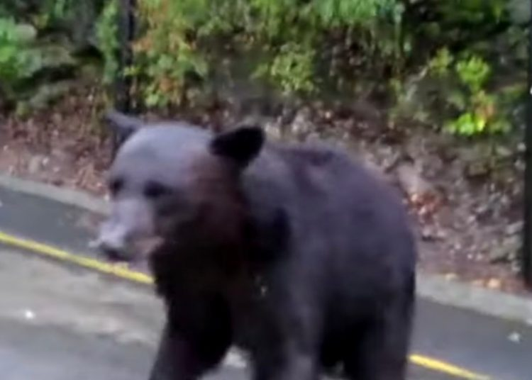 Sujeto ahuyenta a oso con gas lacrimógeno e indigna a las redes