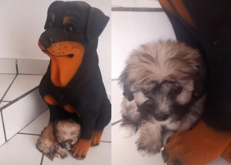 Cachorro se vuelve viral al 'creer' que su mamá es una alcancía en forma de perro