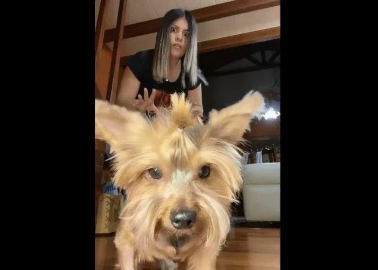 """Perrito juega con su dueña a 'Lus verde, luz roja' de """"El Juego del Calamar"""" y se vuelve viral"""