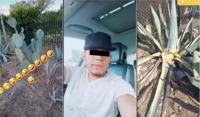 Extranjero se burla de los mexicanos por comer nopales y lo critican en TikTok