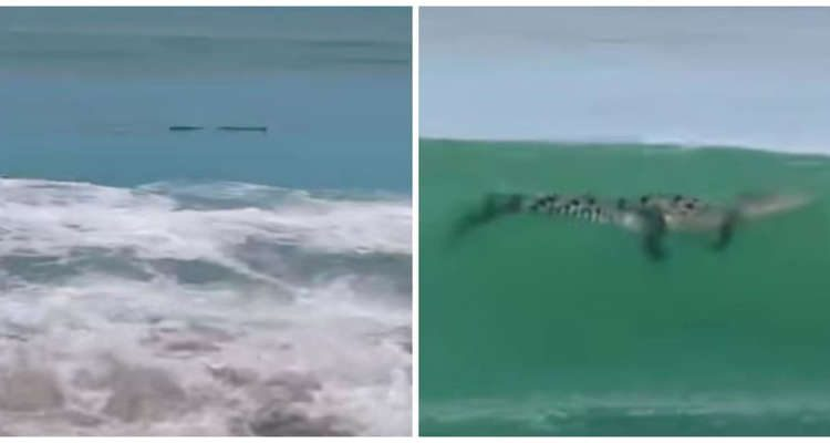 Familia cree que encontró un tronco flotando en la playa, pero en realidad es un cocodrilo; impactante video se hace viral