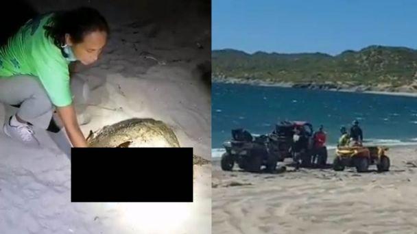 """""""Estos juniors no entienden""""; denuncian atropellamiento de tortugas por 'raicers'"""