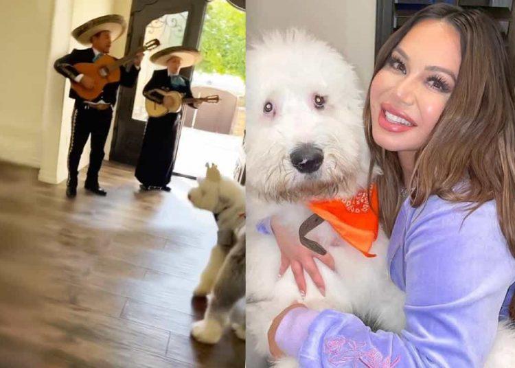 La cantante Chiquis Rivera no escatima en gastos si se trata de su perrito 'Pancho Marin'