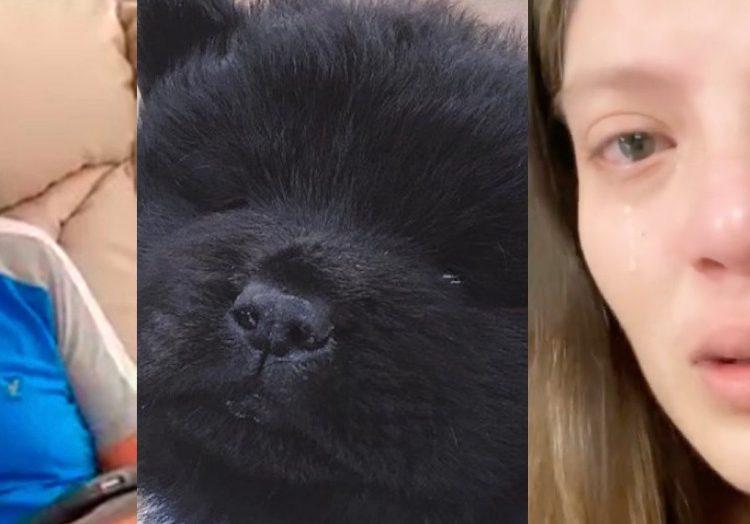 Hija de Julio Preciado entre lagrimas denuncia que su perro fue envenenado
