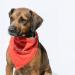 """La persona adoptante del perrito Eugenio tuvo 10 días para decidir pero de último momento dejó al cachorro recién bañado plantado porque """"su mamá no lo había aceptado""""."""
