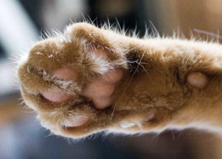 Un habitante rescató 10 de ellos, los esterilizó y cuidó, pero ahora vecinos desalmados han comenzado a envenenar también a sus animalitos.